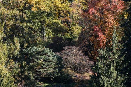 Botanischer Garten, Bern