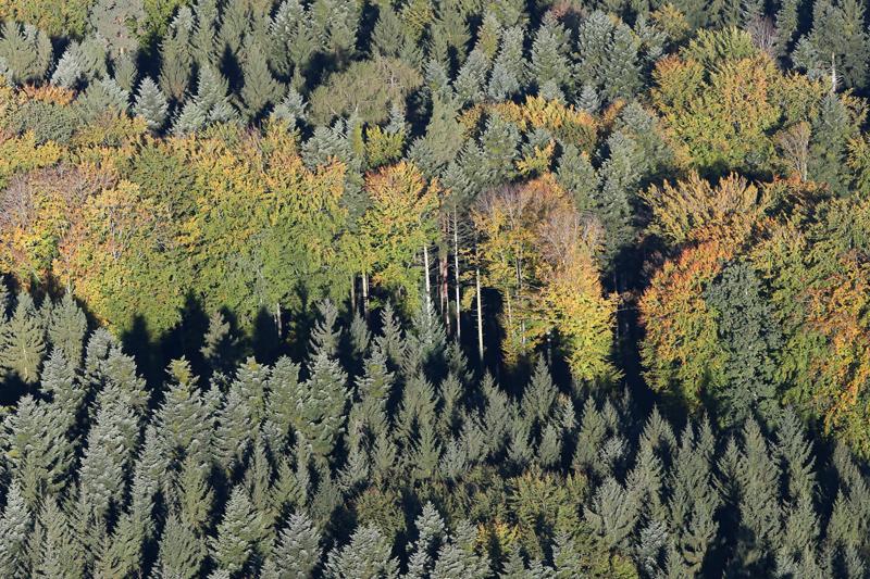 Herbstwald, Bern, Luftaufnahme