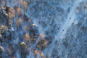 Gurten, Schlitteln, Winter, Luftaufnahme